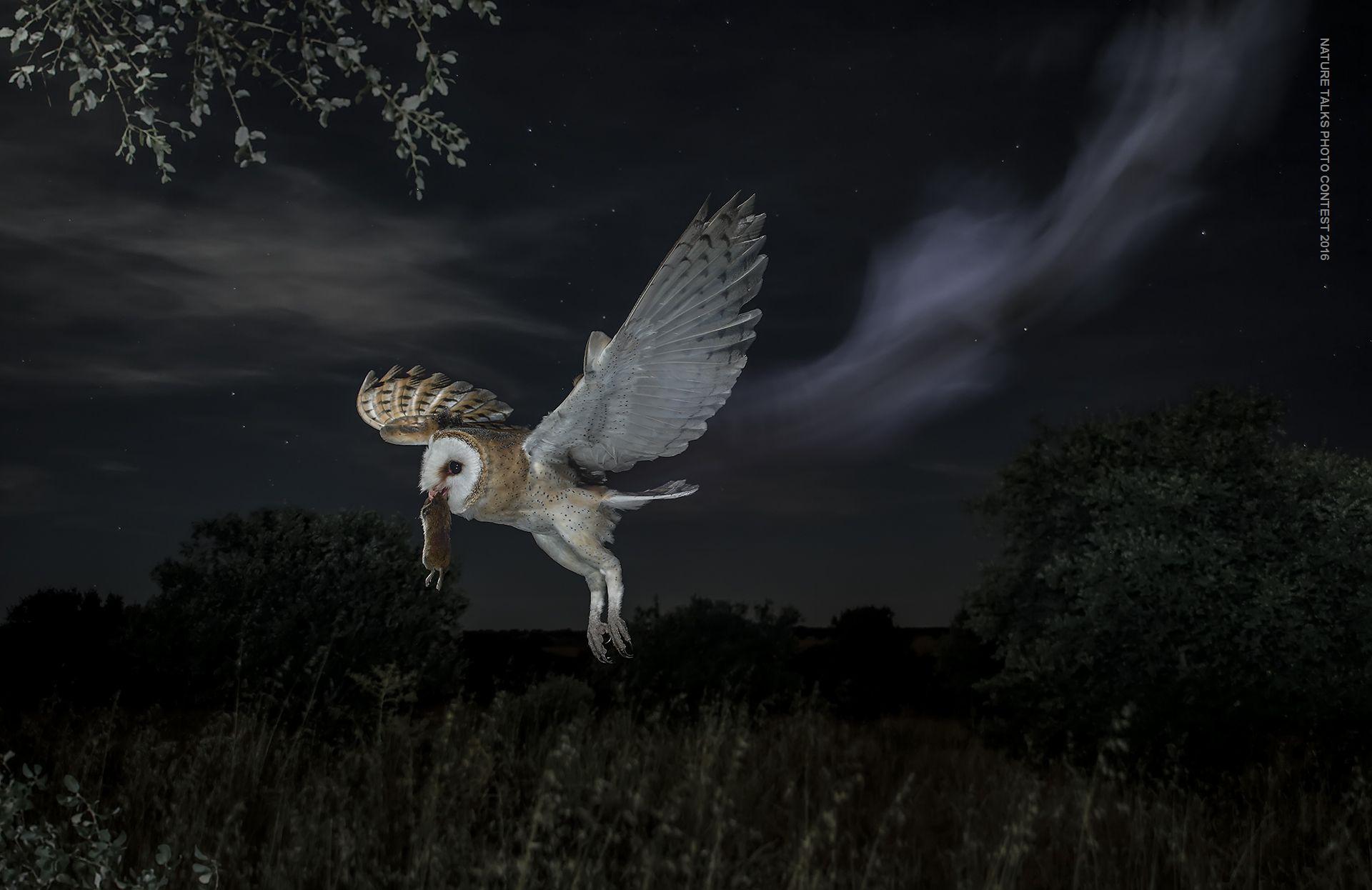 Nightly ghost