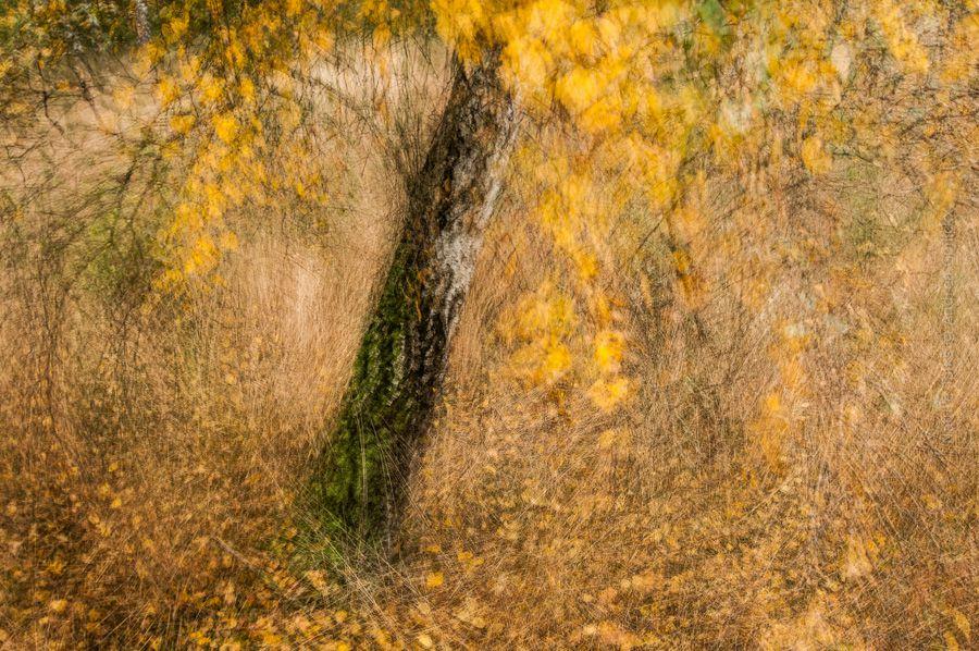 C7 - Nature Art