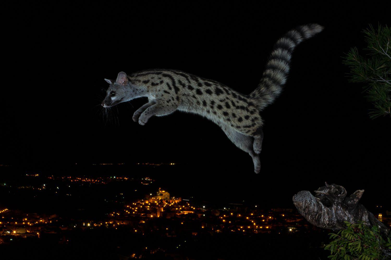 Salto sobre la ciudad