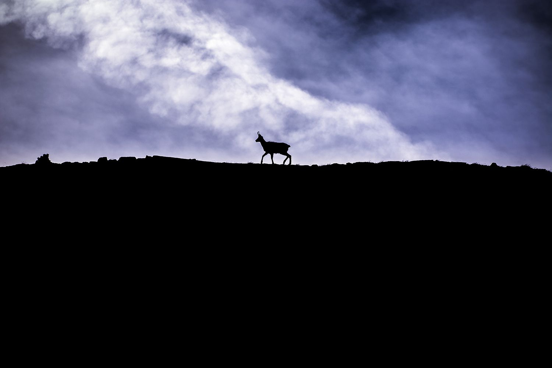 El rey de la montaña