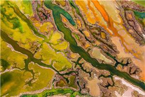 El Arte de las Algas