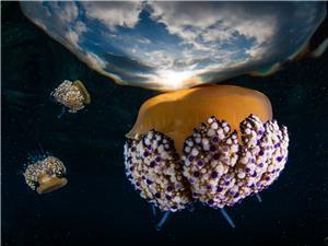 Jellyfish sunrise