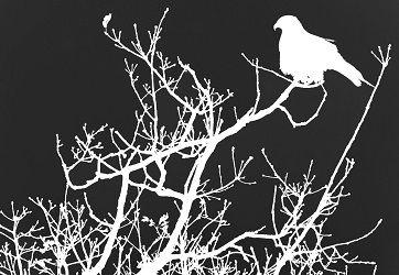 Mundo de las Aves