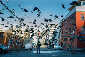 Flocks in Cape Town
