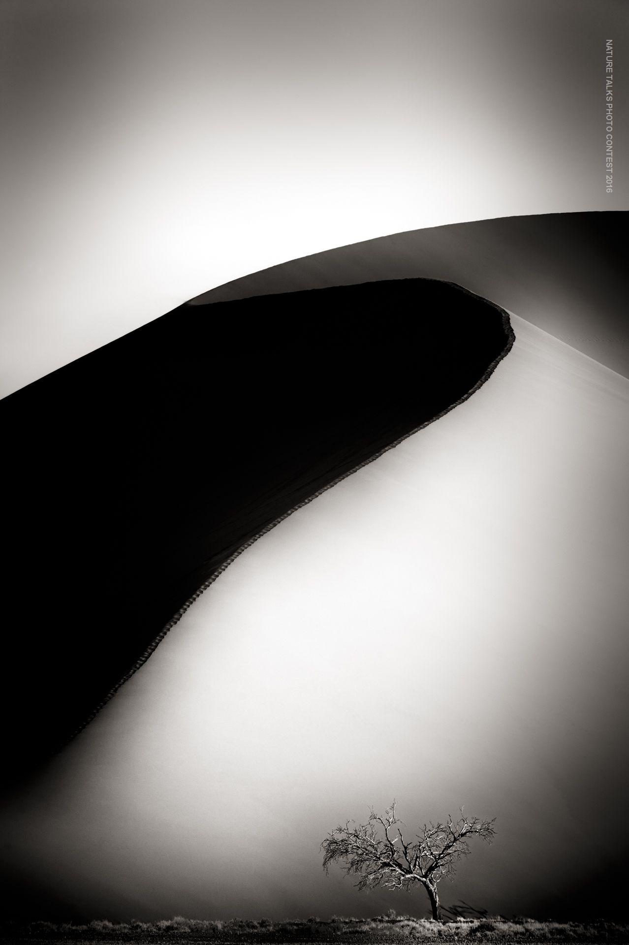 Dune 45 and Tree