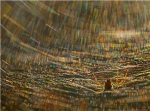 Spider kaleidoscope