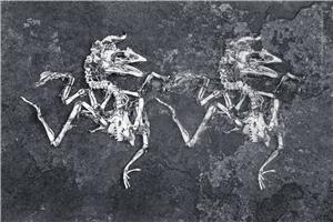 C7_Modern_fossils.jpg