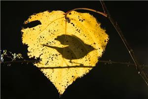 Wings in the heart