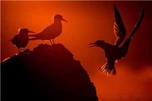 Landing Dawn
