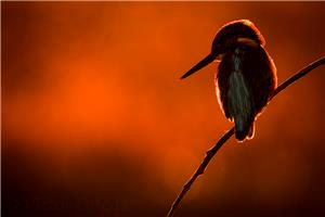Soul of Kingfisher