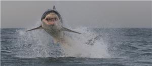 air shark
