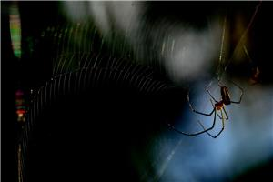 Spider view backlight