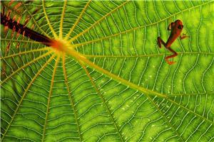Texturas tropicales