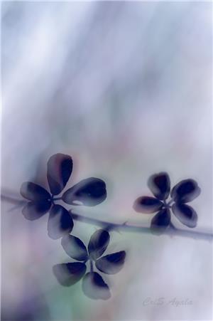 Natural pinwheels