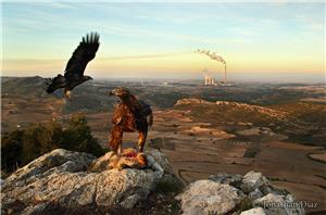 Los dominios del águila real