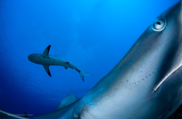 06-Underwater