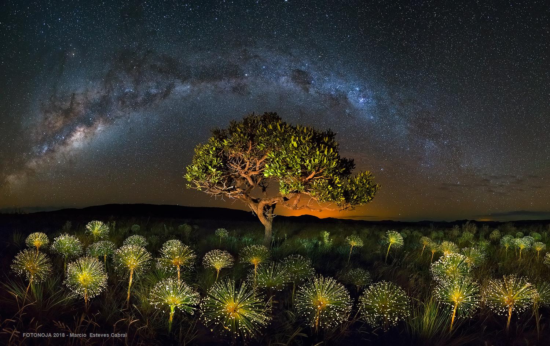 Galactic Savannah