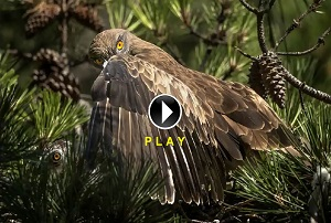 F- Video Corto Naturaleza