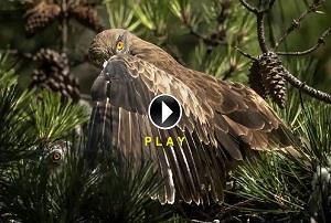 F- Video Corto Naturaleza