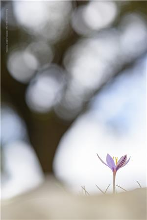 La bellesa de l'efímer