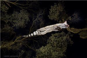 La trapecista de la noche