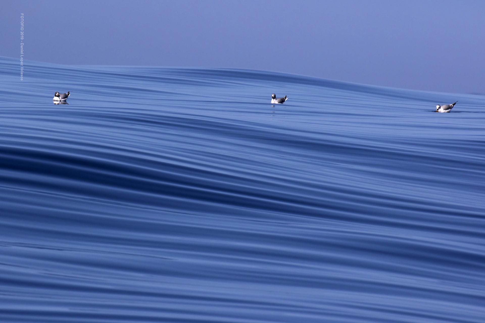 Texturas marinas