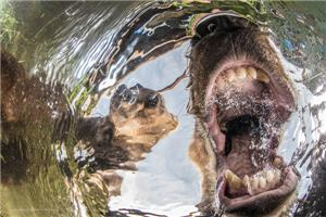 02-Mammals