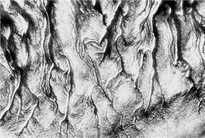5- Arte y Naturaleza