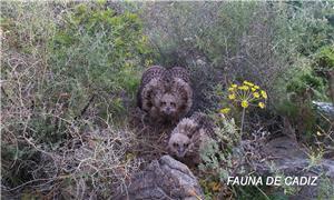 Fauna de Cádiz.