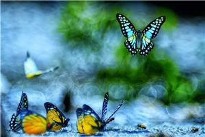 Flight of colours