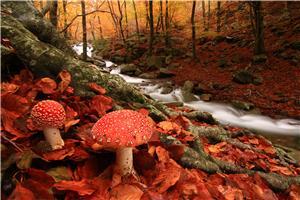 El bosc encantat