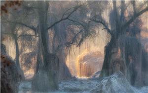 Il bosco incantato N2