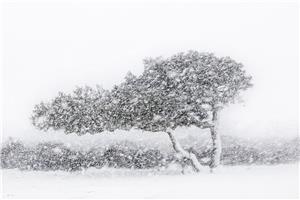 Sardinia. Giara Park, cork oaks under the snow