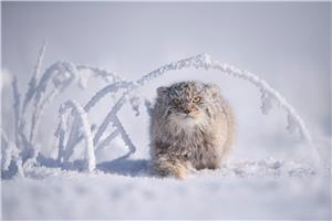 Gato bajo el Arco
