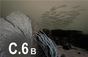 C6b - REPORTAJES FOTOGRAFICOS